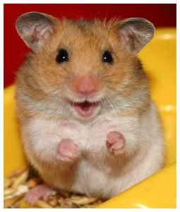 poza cu un hamster