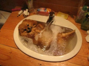 washing-dog