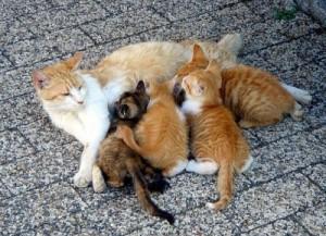 pisica si puii