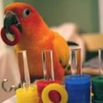 Sfaturi generale cu privire la dresajul papagalilor