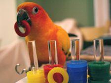 mod dresare papagal