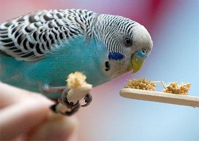 Dresaj perus