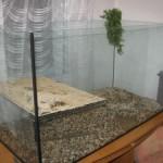 acvariu pentru broasca testoasa