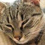 Pisica - animal de companie potrivit pentru tine