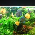 Mentinerea sanatatii pestilor de acvariu