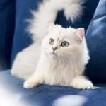 Pisicile – ce iubesc si ce nu