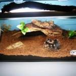 Alegerea si amenajarea terariului pentru tarantula