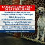 Proprietarii de caini din Bucuresti obligati sa-si castreze cainii