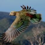 Lucruri interesante despre papagali