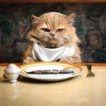 Mancare de oameni ce pot servi si pisicile