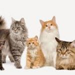 Varsta pisicii in ani umani