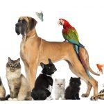 Curiozitati despre animalele de companie