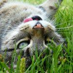 De ce mananca pisicile iarba?