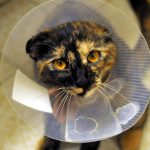 Cum sa ingrijesti o pisica sterilizata