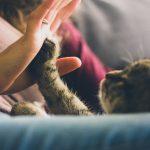 Prima luna alaturi de pisica ta