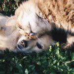 5 sfaturi pentru prelungirea vietii animalelor