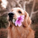 20 lucruri interesante despre caini