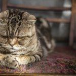 Cele mai bune sfaturi pentru îngrijirea câinilor și pisicilor mai în vârstă
